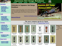 日本産アリ類カラー画像データベース