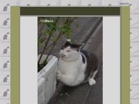 猫・ネコ・Neco