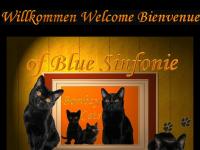 Russisch Blau Katzen of Blue Sinfonie