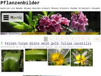 Pflanzen-Bild.de
